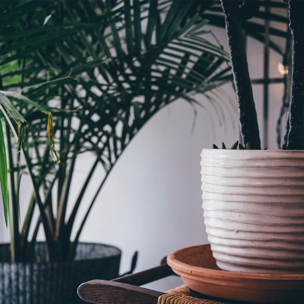 Arihant-blog-Indoor plants-natural-air-purifiers-01