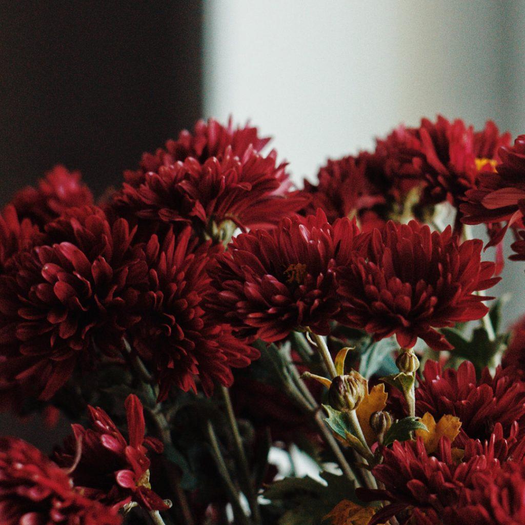 Arihant-blog-Indoor plants-natural-air-purifiers-02