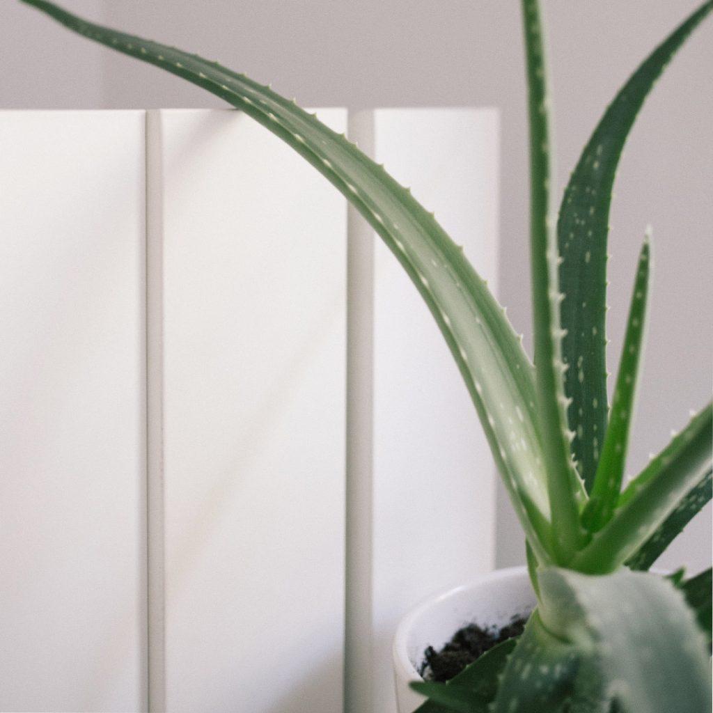 Arihant-blog-Indoor plants-natural-air-purifiers-04