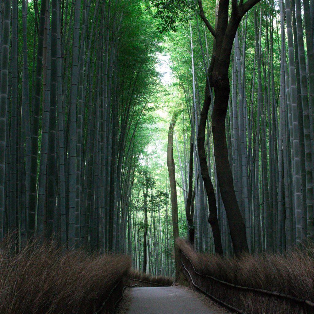 Arihant-blog-natural-memorable-spaces-02