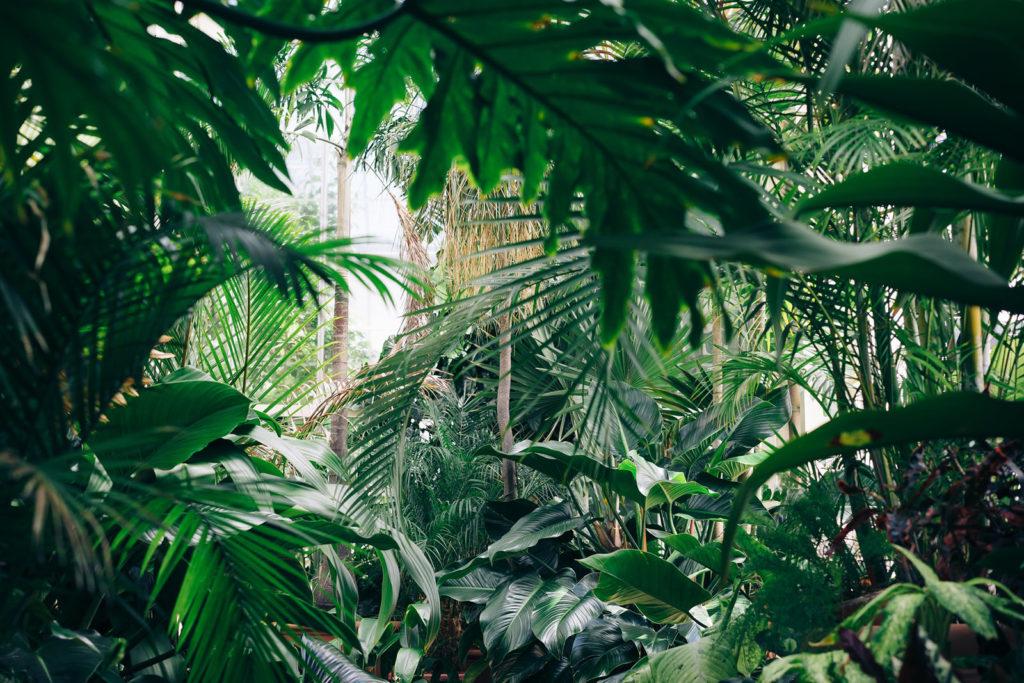 hidden gems of teynampet botanical park